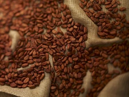 cacao beans: Los granos de cacao sobre el yute