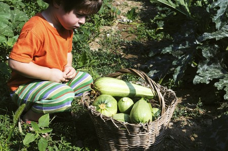 3 4 length: A little boy sitting in front of a basket of freshly picked courgettes
