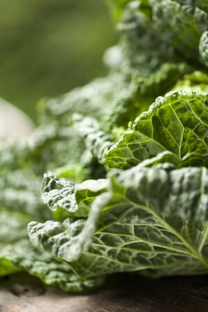 savoy cabbage: Fresh Savoy Cabbage; Close Up