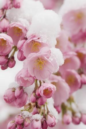 an awakening: Spring awakening LANG_EVOIMAGES