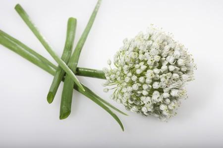 allium cepa: An onion flower onion greens (Allium cepa)