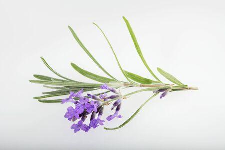 lavender flowers: Lavender flowers