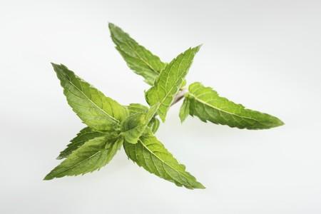 nana: Nana mint (Mentha spicata var. crispa Nane)