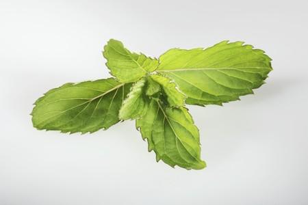 mentha: Swiss mint (Mentha spicata Swiss)