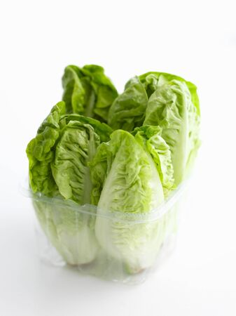 lettuces: Lettuces in a plastic container