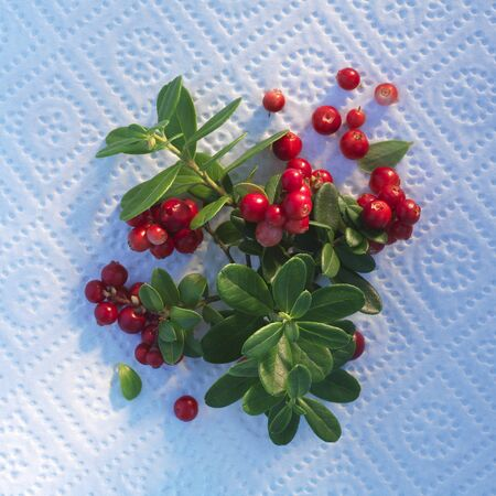 wildberry: Lingonebrries on kitchen paper