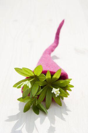 woodruff: Woodruff (Galium odoratum) in a felt cornucopia LANG_EVOIMAGES