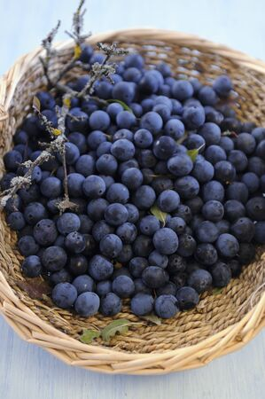 wildberry: A basket of sloe berries