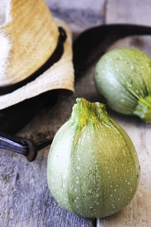 courgette: Round courgette LANG_EVOIMAGES