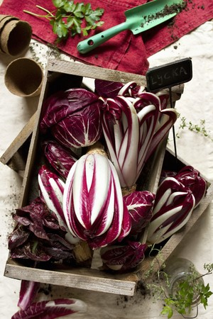 treviso: Assorted types of radicchio in a wooden box