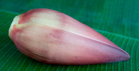 anona: A banana flower for decoration