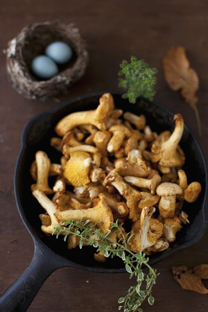 chanterelle: Chanterelle Mushrooms
