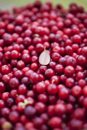 wildberry: Fresh cranberries LANG_EVOIMAGES