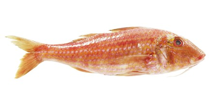 mullet: A fresh red mullet