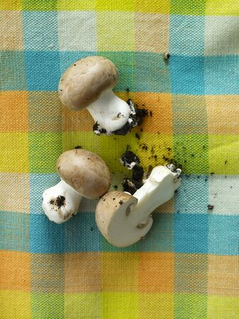 brownish: Fresh brown mushrooms with soil on a checked cloth