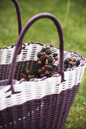 brambleberries: Wild blackberries in a basket in a field LANG_EVOIMAGES