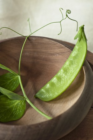 tout: sinle mange tout bean in a wooden bowl with fresh bean leaves LANG_EVOIMAGES