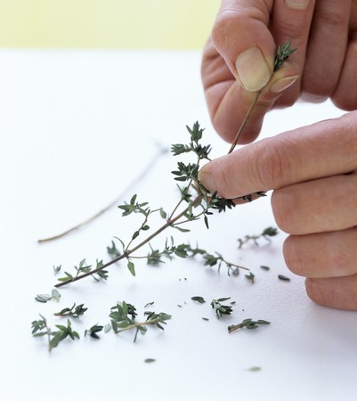 plucked: Thyme leaves being plucked off the stem