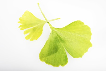 twos: Ginkgo leaves