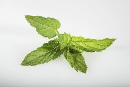 mentha: Moroccan mint (Mentha spicata)