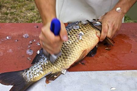 worktops: A carp being descaled