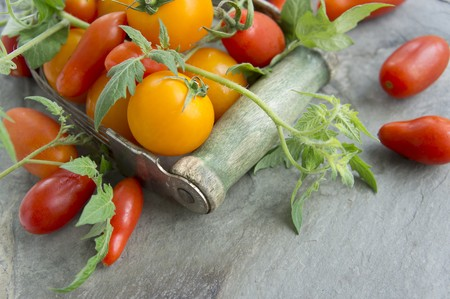 aliments: Various tomatoes with leaves LANG_EVOIMAGES