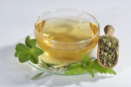 alchemilla vulgaris: Herbal tea in a glass cup (oat, stinging nettle, ladys mantle) LANG_EVOIMAGES