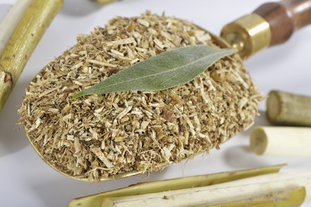 salix alba: Dried and chopped white willow LANG_EVOIMAGES