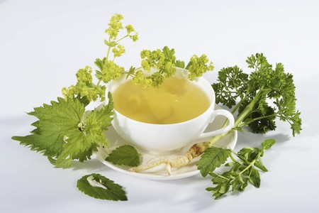 alchemilla mollis: A cup of herbal tea with ingredients (ladys mantle, lemon balm, parsley root, dead-nettle) LANG_EVOIMAGES