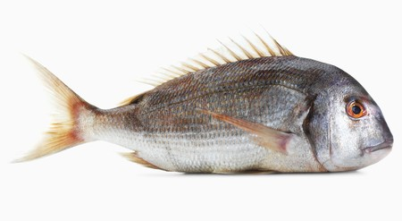 gilthead bream: A pink gilt-head bream against a white background LANG_EVOIMAGES