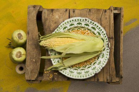 zea mays: Corn on the cob and corn kernels
