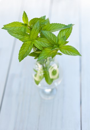 sprigs: Fresh Mint Sprigs in a Glass of Water