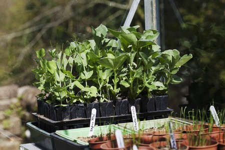 tout: Various vegetable plants in germination pots in a greenhouse