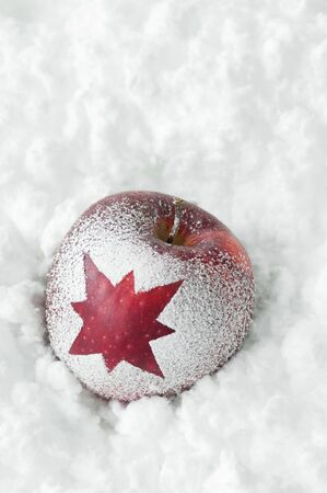 christmas apple: Mela Natale con la neve