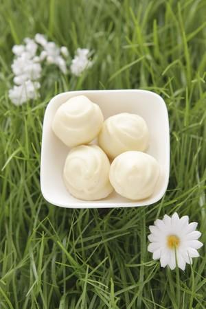 trufas de chocolate: Trufas de chocolate blanco en el c�sped artificial
