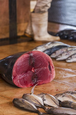 wellie: A large tuna fish at a market in Negombo, Sri Lanka LANG_EVOIMAGES