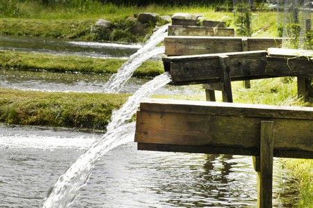 fish rearing: Water flowing into a pond system for breeding Carinthian brown trout (Austria)