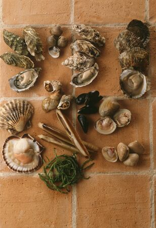 ensis: Assorted fresh mussels, snails and seaweed LANG_EVOIMAGES