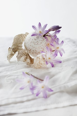 A still life featuring a scilla flower with turkey egg and hosta leaves on a white tablecloth LANG_EVOIMAGES