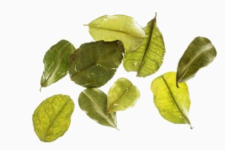 kafir lime: Several kaffir lime leaves