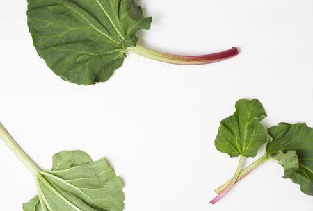 rheum: Rhubarb leaves LANG_EVOIMAGES