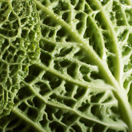 savoy cabbage: Savoy cabbage leaf (close-up)