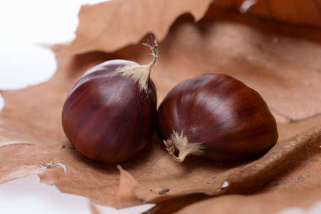 in twos: Two chestnuts