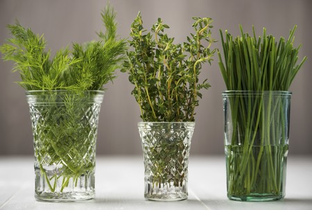 water thyme: Fresh dill, thyme and chives in glasses of water LANG_EVOIMAGES