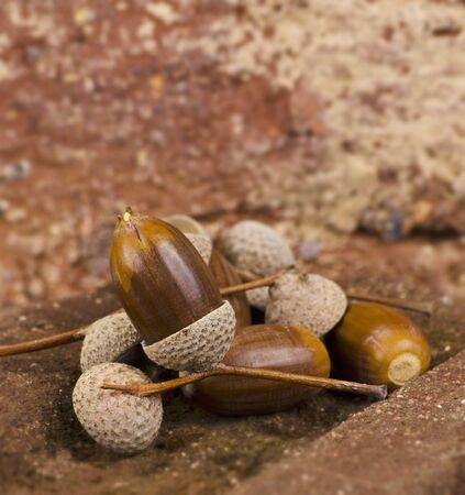 brownish: Several acorns on bricks LANG_EVOIMAGES