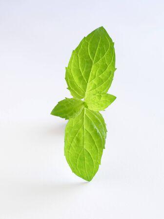 mint leaves: Mint leaves