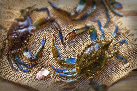 marine crustaceans: Crabs