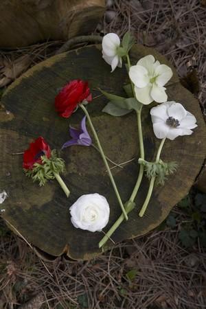 treetrunk: Various spring flowers on a tree stump