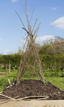 brushwood: A wigwam made of brushwood in a vegetable patch for plants to climb up LANG_EVOIMAGES