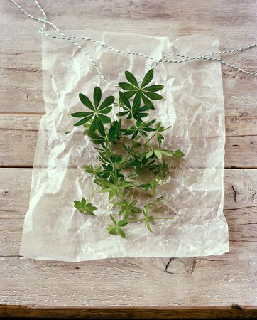 woodruff: Fresh woodruff on parchment paper LANG_EVOIMAGES